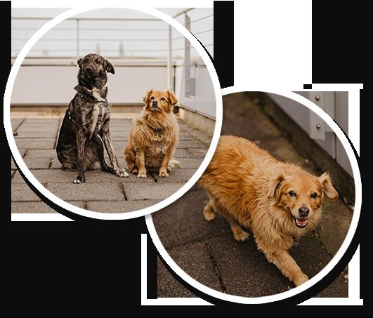 Karriereseite Bilder Hunde